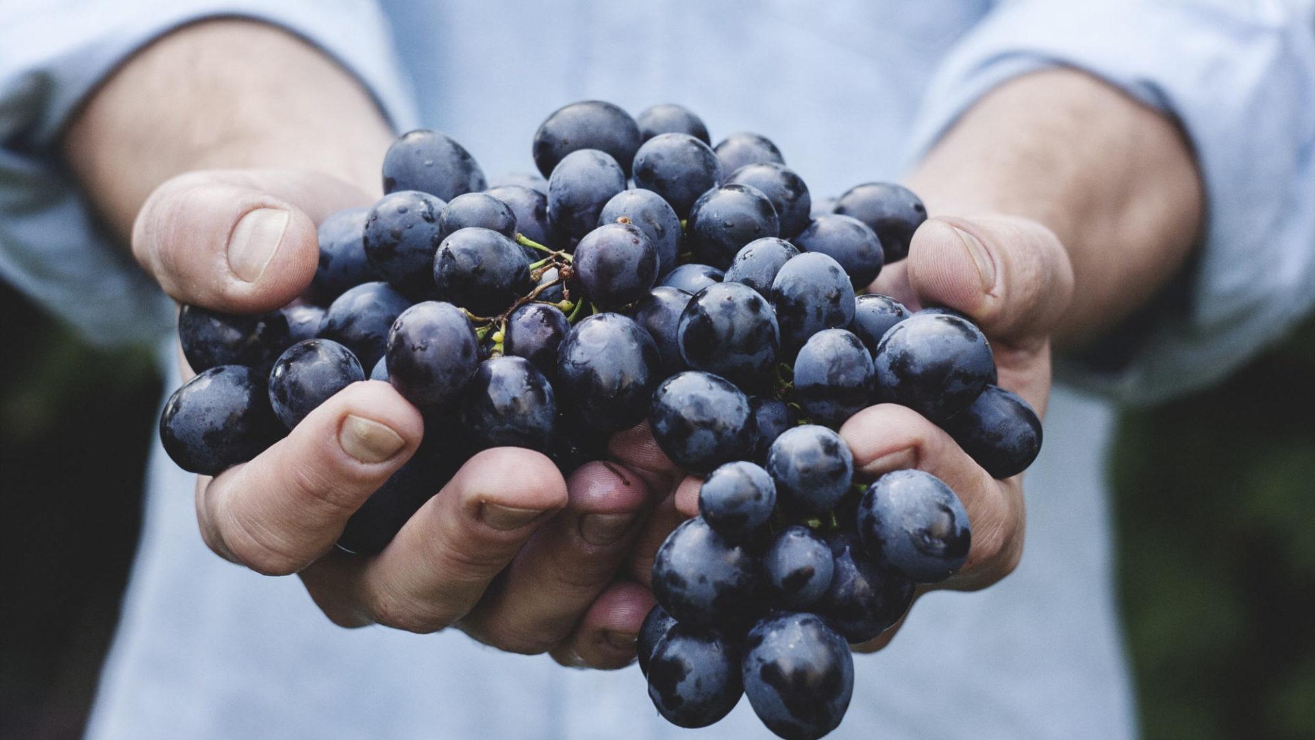 vigneron-independent.com